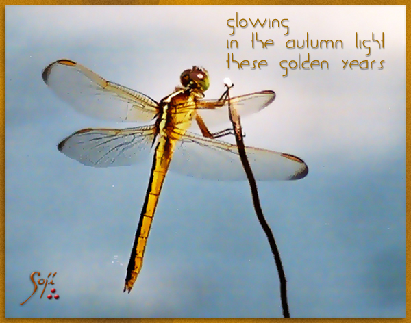 dragonfly-photo-haiku