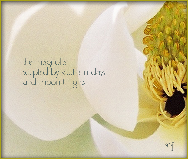 magnolia-Photo-Haiku