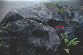 plants-on-mossy-rock